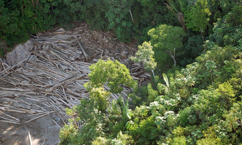 Pesquisadores analisam estratégias de conservação de ecossistemas e recuperação de áreas degradadas na segunda edição da série Conferências FAPESP 60 anos (foto: Agência Brasil)