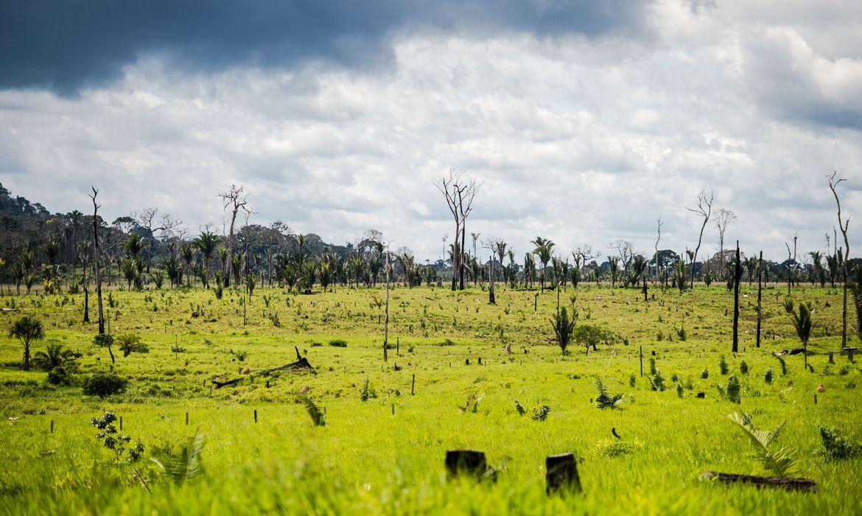 Pesquisadores analisam estratégias de conservação de ecossistemas - (foto: Agência Brasil)