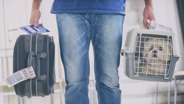"""Pesquisa aponta que 83% dos brasileiros querem viajar com seus """"pets"""" - Imagem 1"""