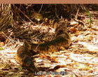 Sucuri gigante é encontrada junto de ninho de arara azul no Pantanal; vídeo