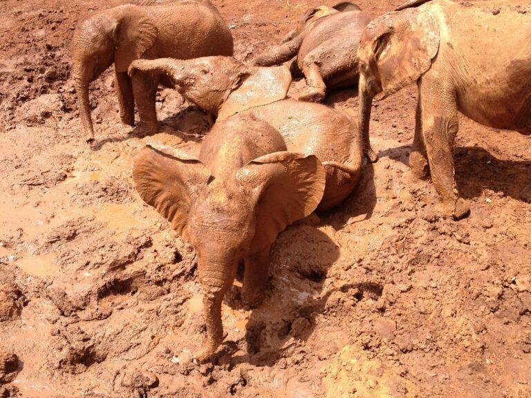 Elefantes durante banho de lama e muita descontração. (Foto: Ilustração   Pixabay )