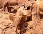 Elefantes são flagrados tomando delicioso banho de lama em santuário