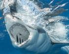 Entenda o porquê dos ataques de tubarão nas praias do Recife