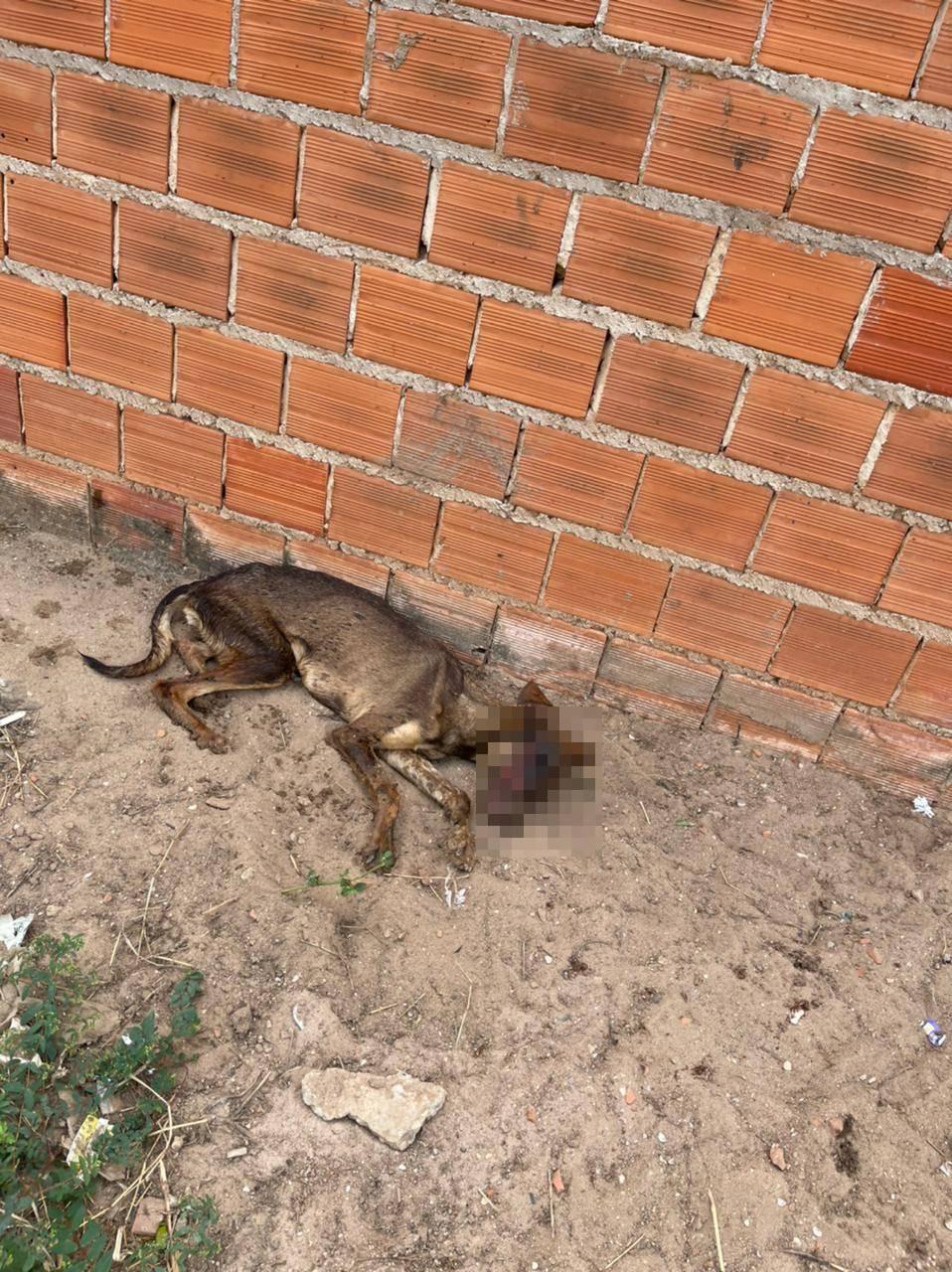 Cadela foi encontrada com o rosto comido por vermes e em carne viva (Foto: Divulgação)
