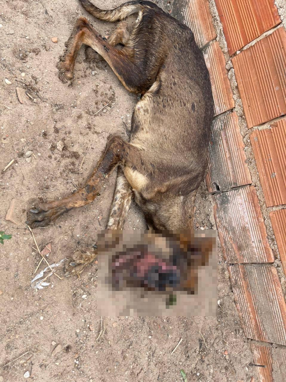 Cadela foi internado em uma clínina na zona Leste de Teresina (Foto: Divulgação)
