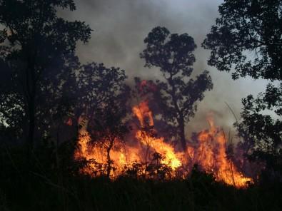 Fogo controlado na Área de Proteção Ambiental do Jalapão, no Tocantins; a redução do material combustível na época das chuvas evita grandes incêndios na estação seca (foto: Vânia Pivello/IB-USP)