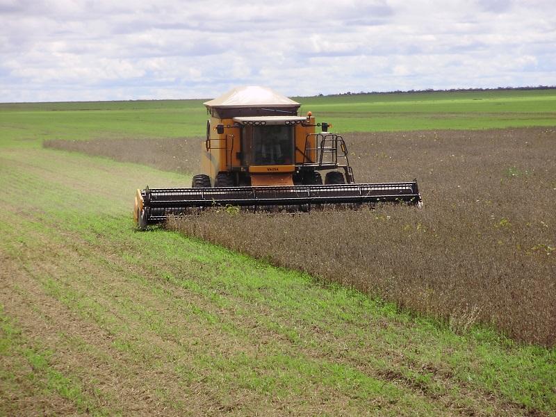 Transcerrados leva Piauí a ser o 10º maior produtor agrícola do Brasil - Imagem 3