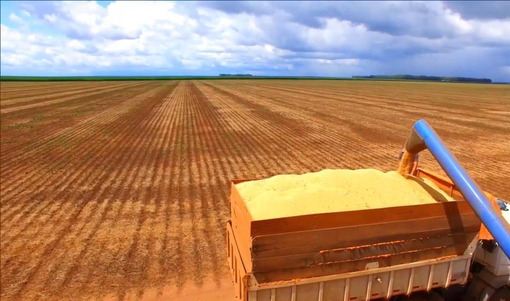 Colheita da soja preparada para comercialização. (Foto: Divulgação)