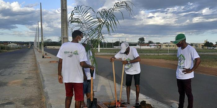 Piripiri terá avenida arborizada com palmeiras imperiais e iluminação solar
