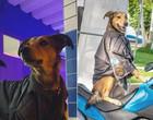 Cabo Oliveira, o cão policial que ficou famoso nas redes sociais