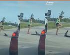 Jacaré atravessa rua e pedestre mulher trava luta para retirá-lo com o pé