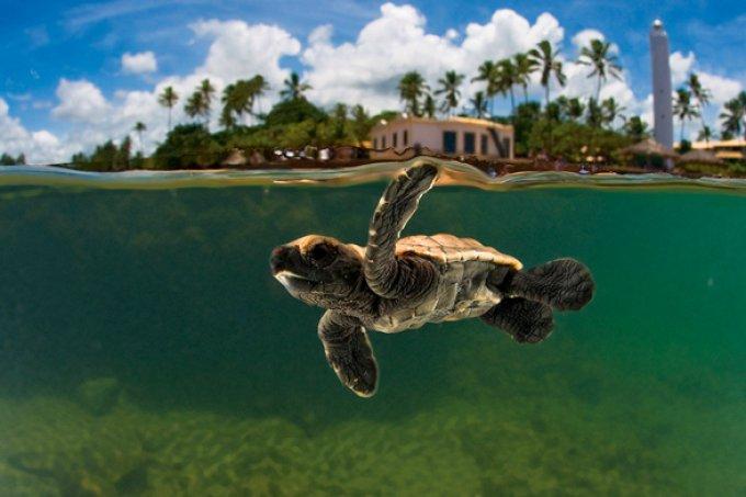 Projeto Tamar preserva a vida marinha (Foto: Reprodução/Internet)
