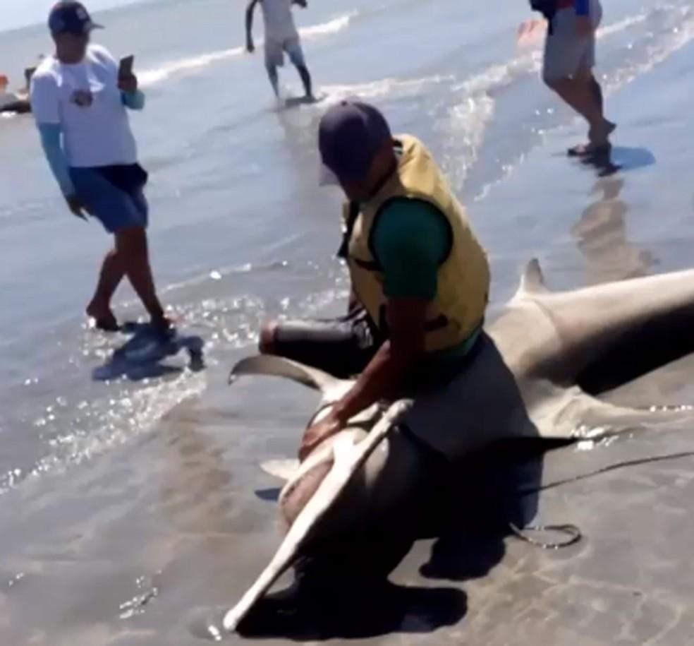 Homem foi fotografado sentado em cima de tubarão-martelo neste sábado. (Foto: Reprodução - WhatsApp)