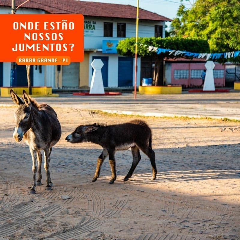 Animais nas ruas de Cajueiro da Praia- Foto: Reprodução