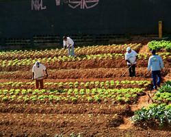 Produção de alimentos: geração de empregos é a maior desde 2011