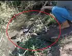 Vídeo assustador mostra cachorro sendo atacado e enrolado por cobra sucuri