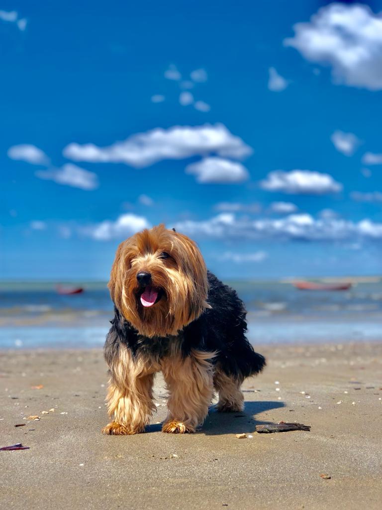 Bud em viagem à praia