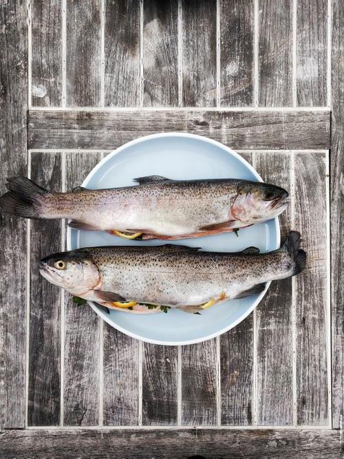 Paciente deve informar se consumiu peixe nas 24h anteriores. (Foto: Gregor Moser-Unsplash)