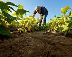 Produção de alimentos e mudas são sustento de 40 famílias em União