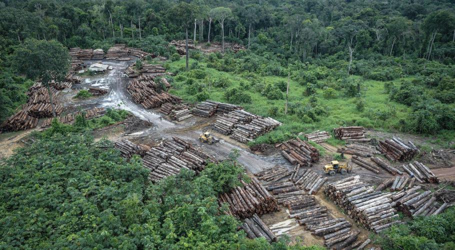 Debate aponta recente aceleração do desmatamento, sobretudo na Amazônia, no Pantanal e no Cerrado- Foto: Agência Brasil