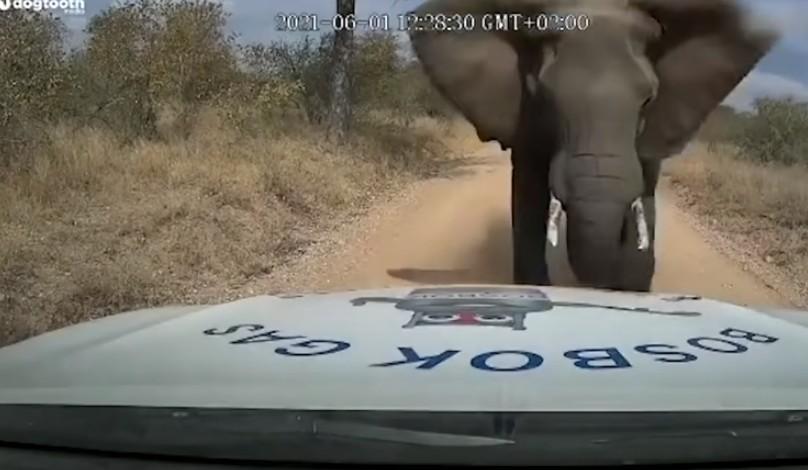 Elefante se sentiu ameaçado e atacou veículo destruindo o capô . (Foto: - Reprodução-YouTube-The Sun)