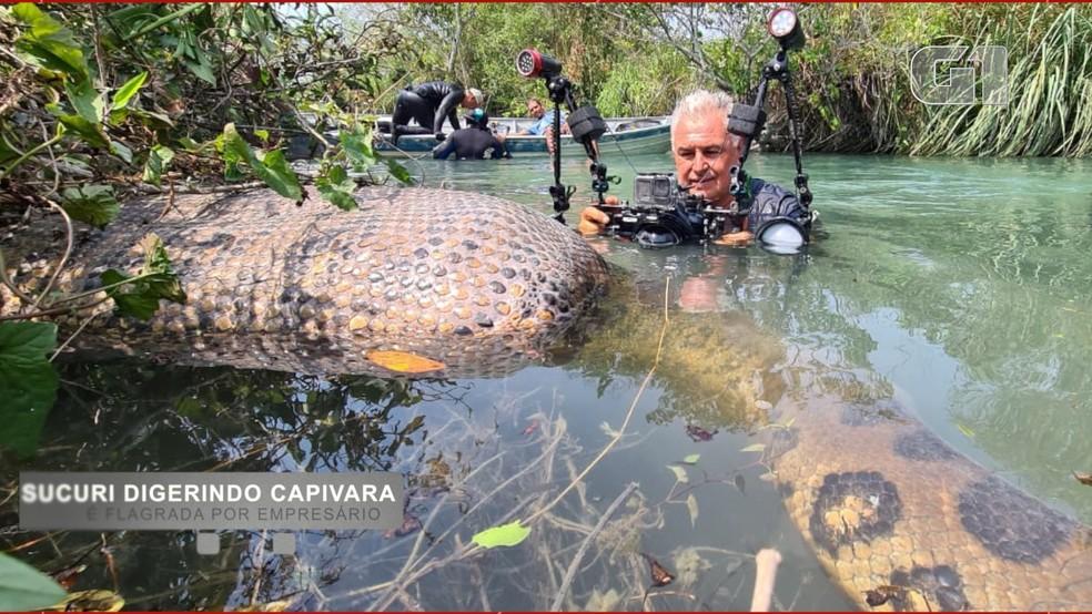 O corpo da capivara boiava sobre o rio, por causa do alimento sendo ingerido. (Foto: Juca Ygarapé/Arquivo Pessoal)