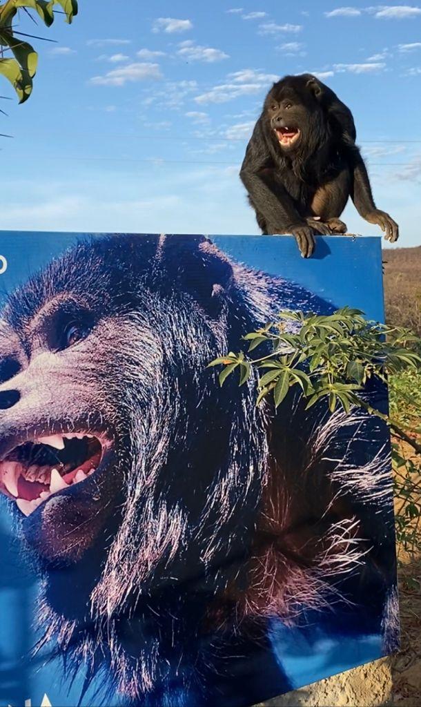 Macaco está sendo criado como animal doméstico em São Raimuno Nonato - Fotos: André Pessoa