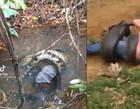 VÍDEO: Sucuri gigante mata bezerro e quase estrangula peão em fazenda