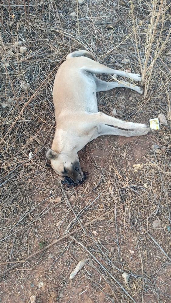 Animais são encontrados mortos com sinais de envenenamento na cidade de São Julião - Foto: Reprodução/Cidades Na NetAnimais são encontrados mortos com sinais de envenenamento na cidade de São Julião - Foto: Reprodução/Cidades Na Net