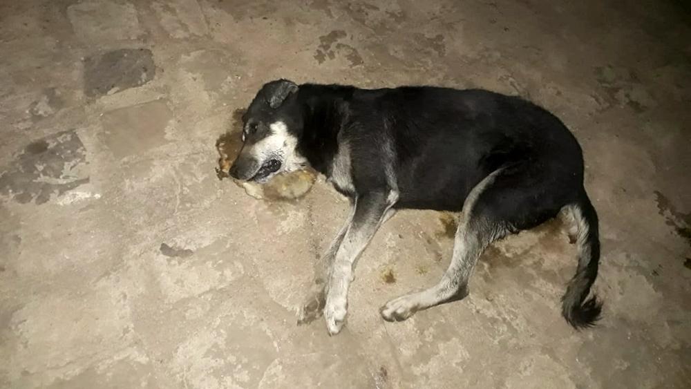 Animais são encontrados mortos com sinais de envenenamento na cidade de São Julião - Foto: Reprodução/Cidades Na Net