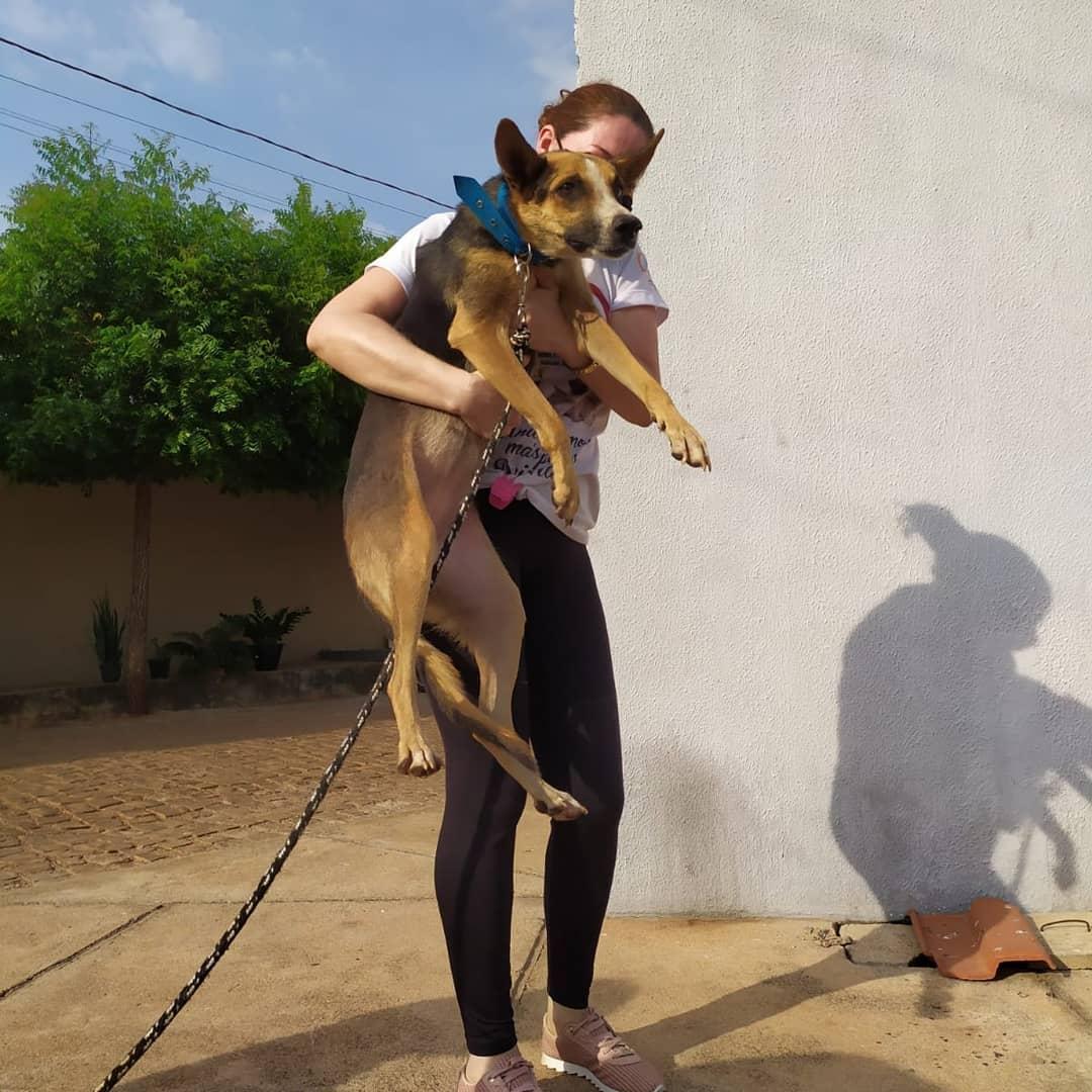 Cadelinha foi resgatada, será castrada e ficará disponível para adoção - Foto: Instagram