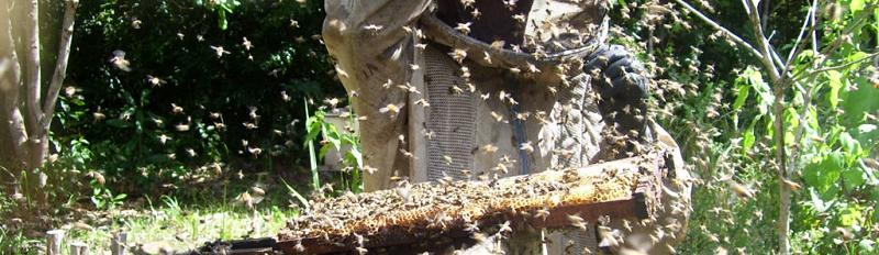 Casa Apis, em Picos, cidade é destaque na produção de mel (Divulgação)