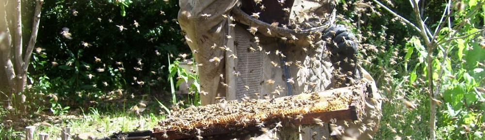 Produção de mel na Casa Apis (Divulgação)