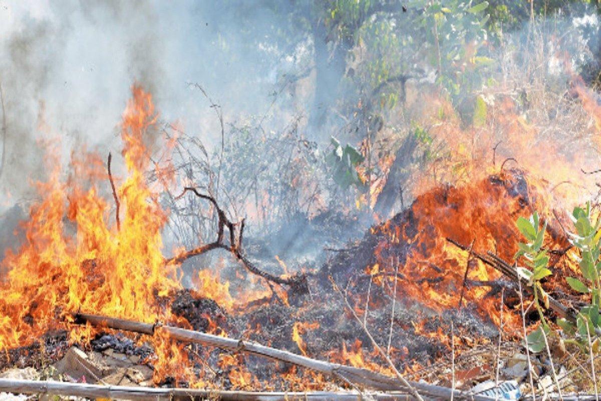 Piauí teve o 2° maior crescimento de queimadas no Brasil (Foto: portal Meio Norte)