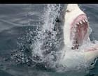 Tubarão ataca surfista  e ele não resiste a ferimentos