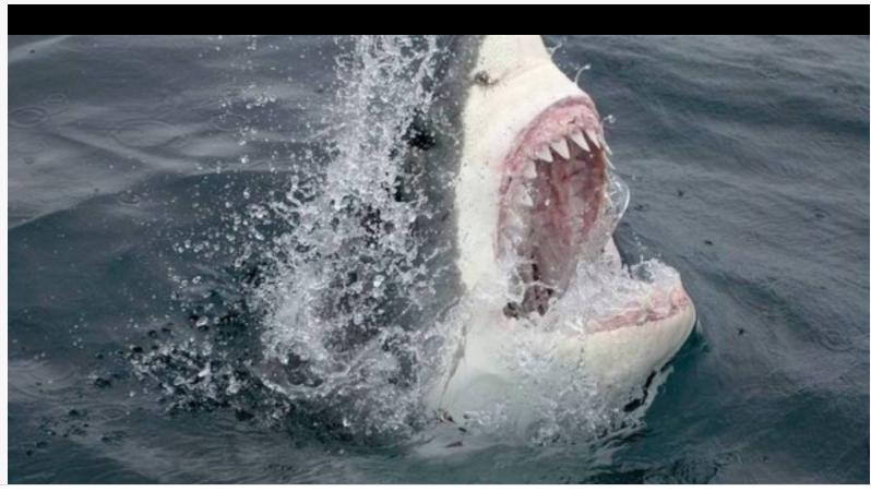 Homem não resiste a ataques de tubarão/Twitter @sebastianarcher