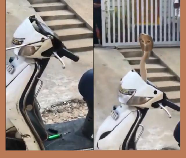 Cobra se esconde dentro de moto Biz e assusta moradores na Índia; vídeo