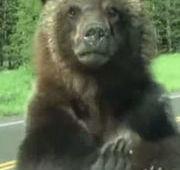 Família filma encontro com urso em 'parque do Zé Colmeia'
