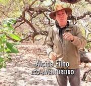 NO AGORA: Alcide Filho mostra o cajueiro rei no litoral do Piauí