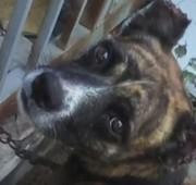 Jovem é denunciado por cortar orelhas de cachorro com facão
