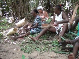 Inclusão Social: Movimento das Quebradeiras de Coco Babaçu garante direito de famílias