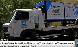 """Momento histórico para proteção animal no Brasil"", diz Luisa Mell sobre transferência da Marsha"