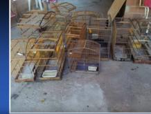 Animais e armas são apreendidos durante operação no interior do Piauí