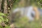 Vaqueiro encontra corpo em estado de putrefação dentro de matagal em Teresina