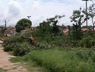 Polícia apura crime ambiental em praça do Saci que as árvores cortadas
