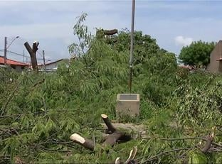 Homem apontado como autor de poda de árvores presta depoimento