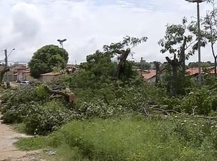 Homem acusado de mandar podar árvores presta depoimento