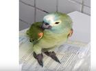 Papagaio é detido ao tentar impedir que traficantes fossem presos