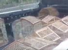 Jovem é preso com arma de fogo, drogas e animais silvestres em THE