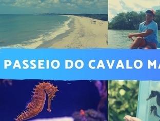 Tour ecológico em Barra Grande - PI